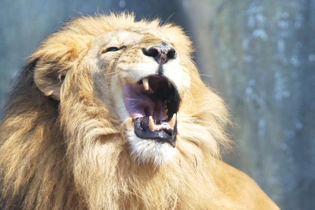 動物虐待、動物園